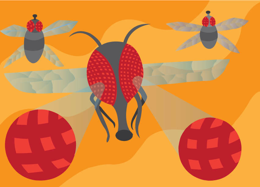 Vector Issue #6419: Bugs' eyes, an enlarged visual representation of a fly's compound eyes