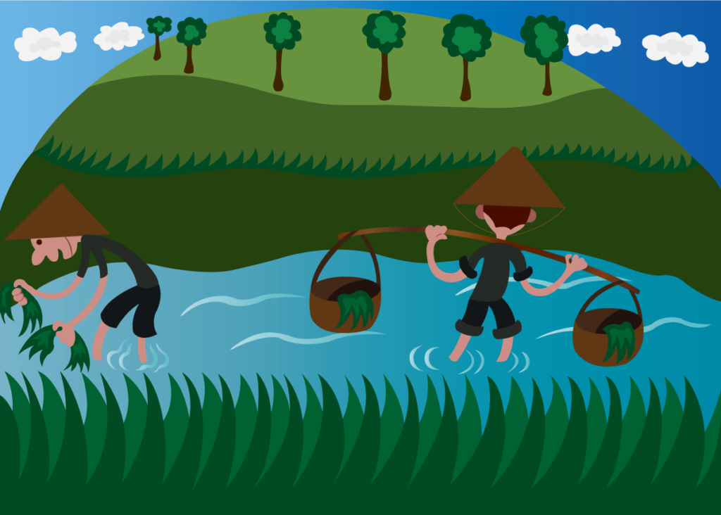 Vector Issue #6098: Asian Farmers in the Fields Growing Rice