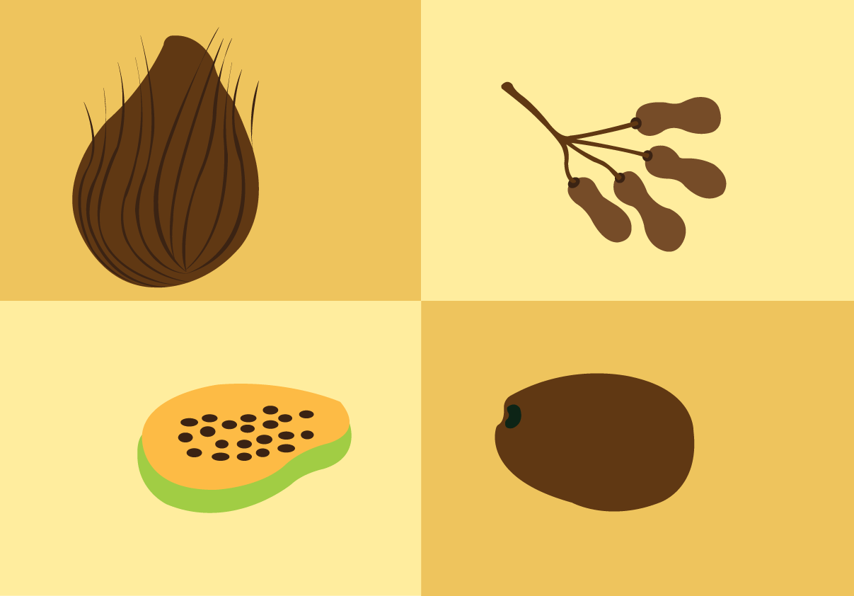Vector Issue #6608: tropical fruits 3-a sample of tropical fruits